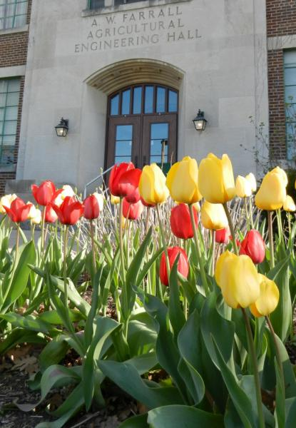 MSU Farrall Hall in the Spring