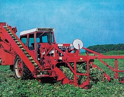 Photo of MSU designed once-over mechanical cucumber harvester