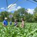 Researchers gather around a sensor in a cornfield