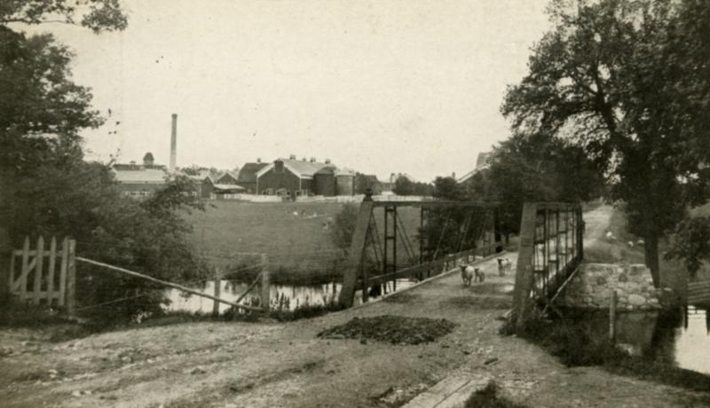 Photo courtesy of Michigan State University Archives & Historical Collections - animals on Farm Lane 1909