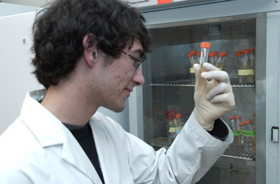Trevor Mclean checking out bacterial growth for his biosensor experiments.
