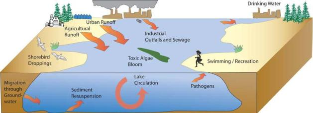 cause and effect of lake huron pollution Changes in lake huron's ecosystem and foodweb cause chinook salmon collapse summer 2010 a recent wave of invasive-species (zebra and quagga mussels and round gobins) lake huron caught.
