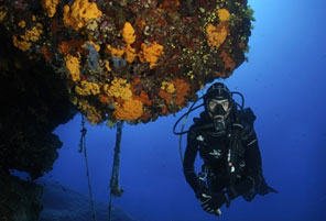 Photo of a person scuba diving